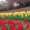 Photos: 流れ去る春