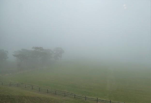 霧中の国営牧場