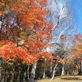 Photos: 那須ロープーウエイ山頂広場