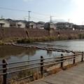 Photos: 岩崎橋下流の飛び石 甲突川 鹿児島