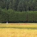 Photos: 里山の散歩