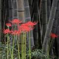 写真: 藪に咲く