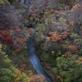 Photos: 雪割橋から見下す秋
