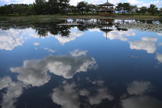 Photos: 夏日和