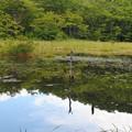 Photos: 観音沼森林公園