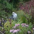白猫のいる風景