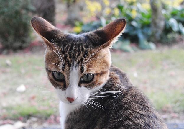 でかいぞ猫耳