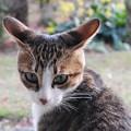 Photos: でかいぞ猫耳