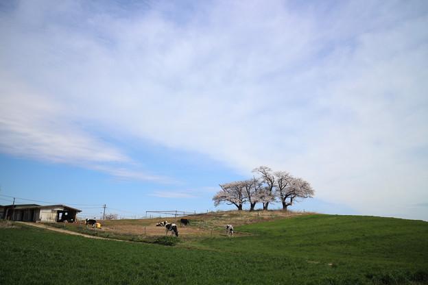 Photos: 待ち遠しい季節