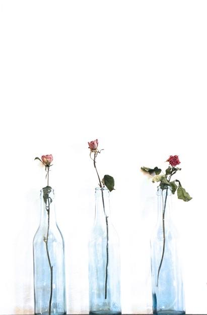 Photos: 硝子瓶のバラ