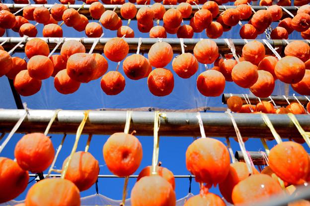 柿Fall1