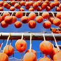 写真: 柿Fall1