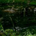 Photos: 池は映す