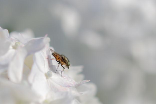 Photos: 花に映え