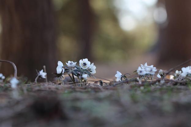 地表の小花