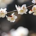 咲きそろい