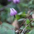 写真: 野の花の品格