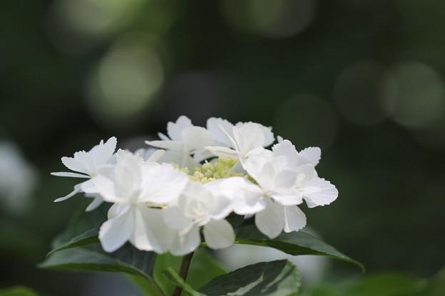 幼子の花かんむり