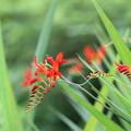 Photos: 赤い竜
