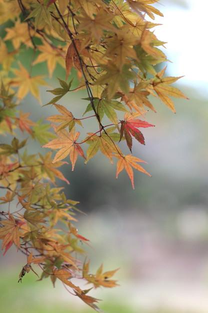 Photos: 錦ゆるく