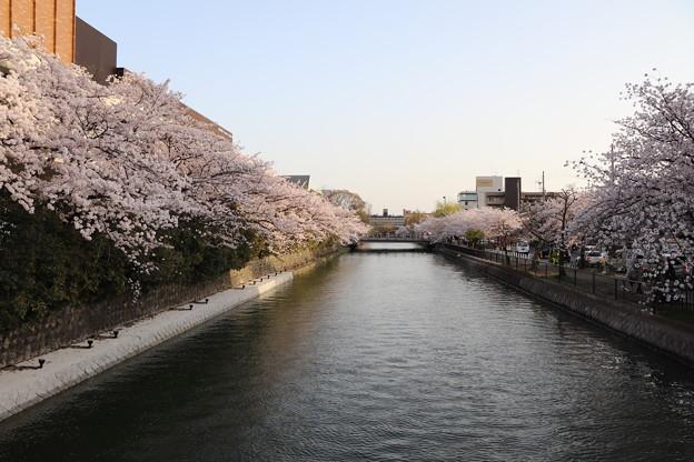 Photos: 河川の桜