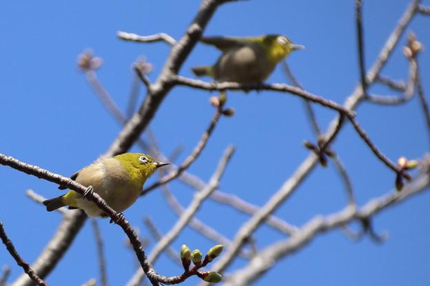 Photos: 春はまだかな