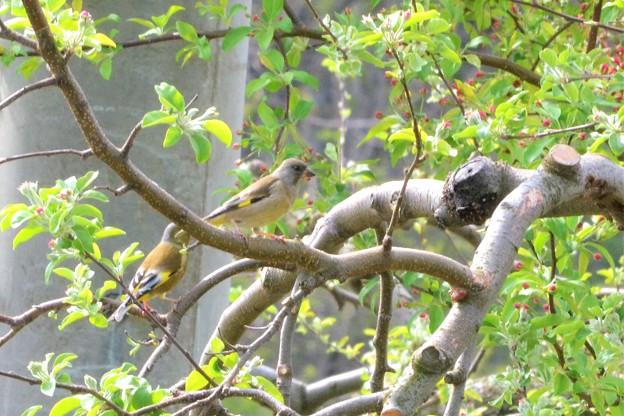 写真: リンゴの木にツーショット~