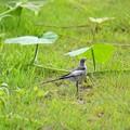 写真: 爽やかな小鳥さん~