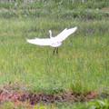 写真: 美しい翅が~