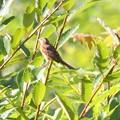 写真: 涼しくなり野鳥の姿も~