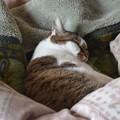 写真: 我が家のネコさん