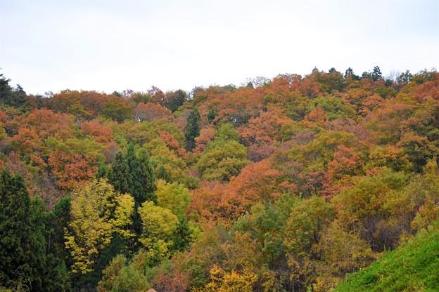 散策路の紅葉~