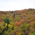 写真: 散策路の紅葉~