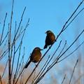 写真: ガビちゃんも2羽で~
