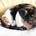 Photos: 我が家のネコちゃん