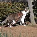 Photos: 我が家のネコ