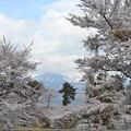 Photos: 背景が吾妻小富士です。