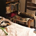 Photos: 我が家のニャンコさん~