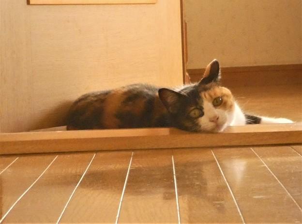 Photos: 暑さに耐えるネコちゃん~