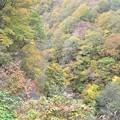 Photos: 紅葉が~