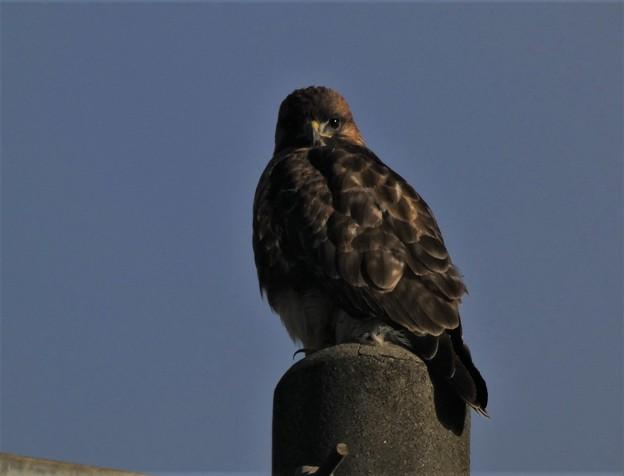 Photos: 鋭い猛禽が~