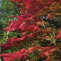 Photos: 紅葉の彩が~