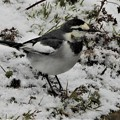 Photos: 雪の中で~