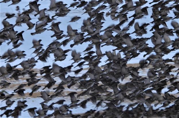 雀の群集?