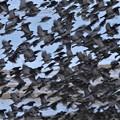 Photos: 雀の群集?