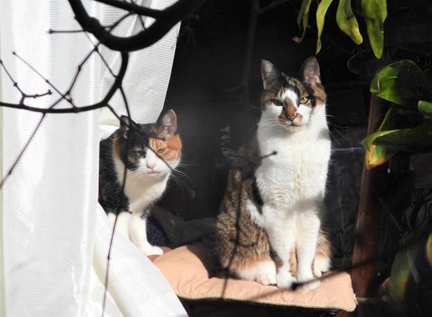 Photos: 我が家のネコ~