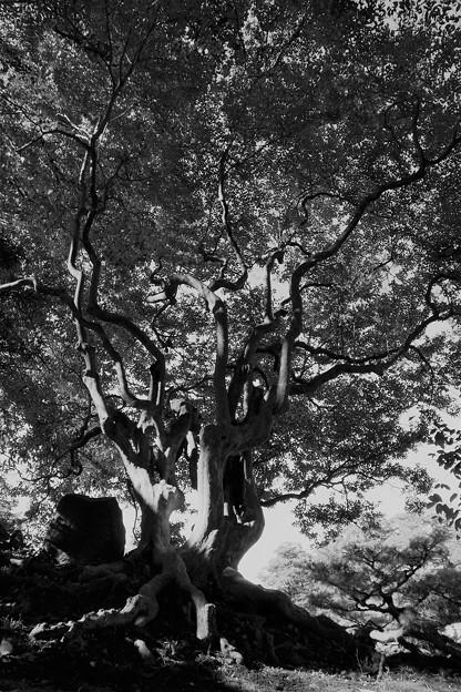 見事な枝ぶりの木
