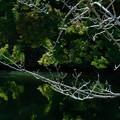 Photos: お堀に写る緑