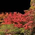 百済寺の庭 其の一