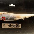 写真: チゴダラの発光器
